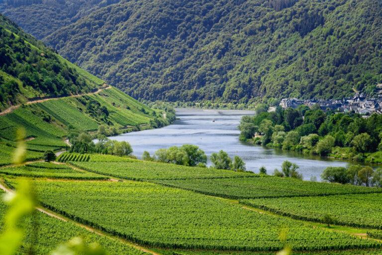 confagricoltura descrive il mondo del vino
