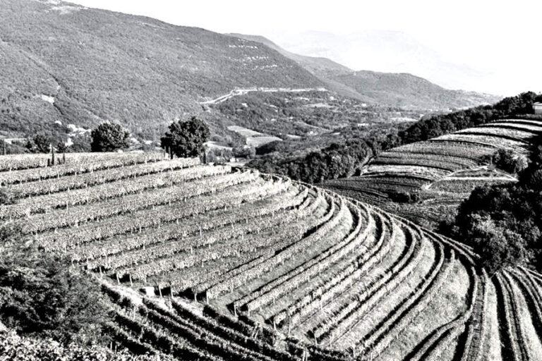 eric asimov scrive sugli orange wine