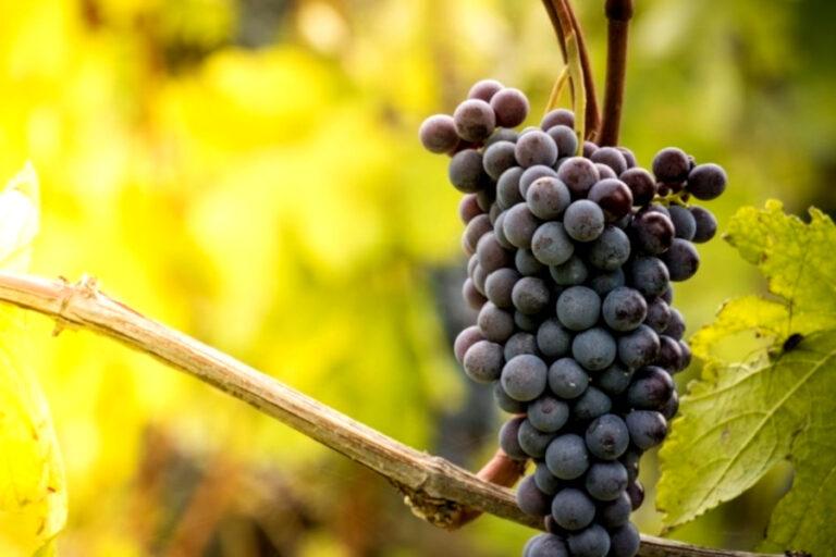 antonio galloni racconta i nebbioli del nord ai lettori di vinuos