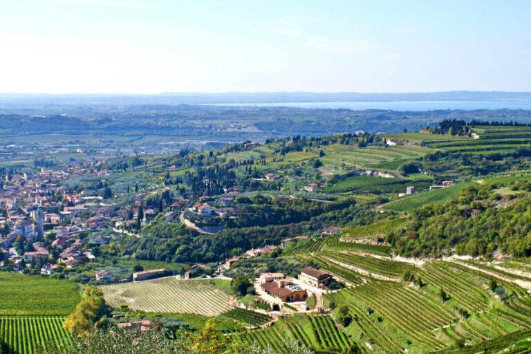 Per incrementare la qualità percepita l'associazione guidata da Alberto Zenato pensa a una differenziazione produttiva tra le aree di collina e pianura.