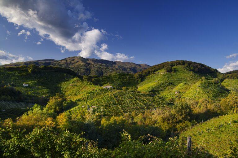 Una ricerca del Crea sancisce la fine del primato del vitigno e allarga la prospettiva agli elementi culturali e morfologici tipici di ciascuna sottozona del Conegliano Docg.