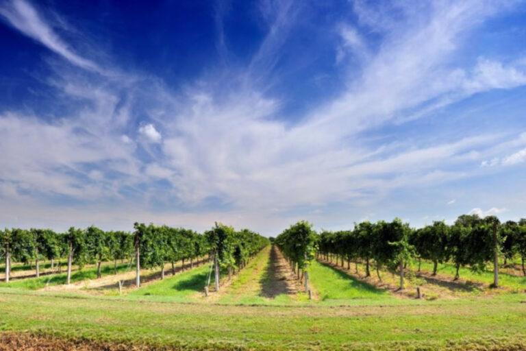 Il Triveneto prova a definire una strategia comune per tutelare il valore del Pinot Grigio.