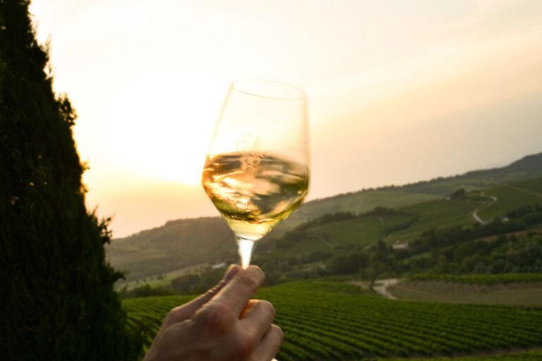 Pinot Bianco, Sauvignon, Friulano, Malvasia e Ribolla Gialla tra i vitigni interessati dalla misura di riduzione decisa dai viticoltori friulani.