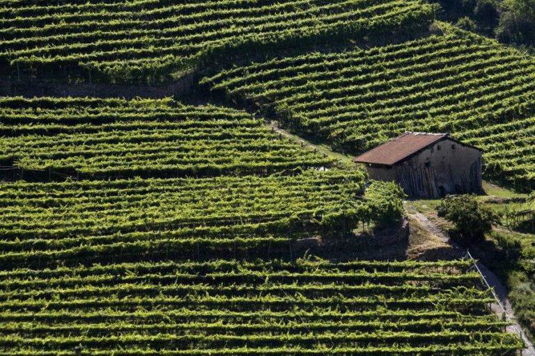 785 etichette provenienti da 19 paesi mondiali saranno le protagoniste del Mondial des Vins Extrêmes 2020, concorso dedicato ai frutti della viticoltura eroica.