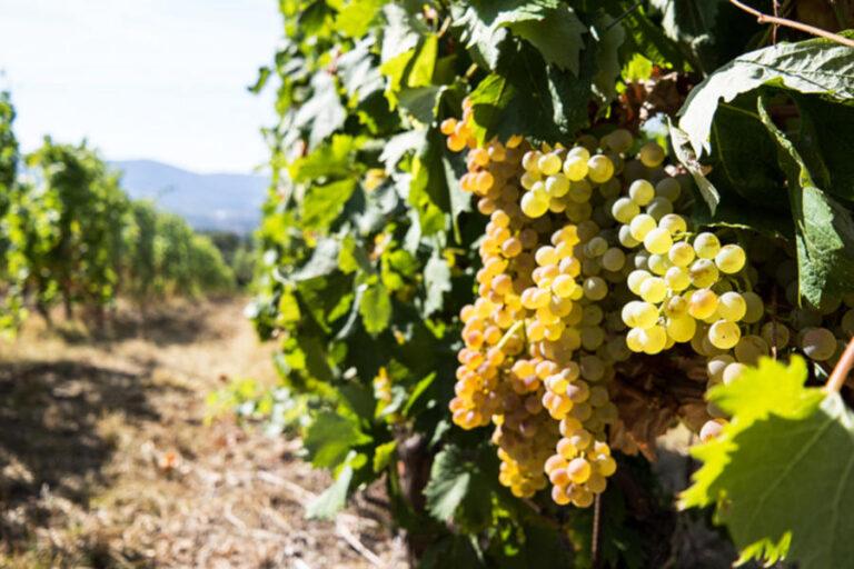 Dalla neonata iniziativa che unisce viticoltori e ristoranti liguri un nuovo approccio al turismo esperienziale.