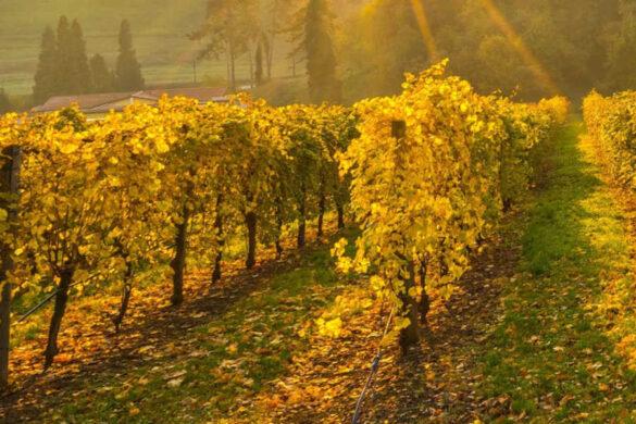 Il Consorzio Romagna unisce passato e futuro della comunicazione in una piccola opera d'arte dedicata al vino e al suo legame con il territorio.
