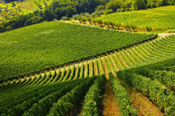 Confagricoltura giudica positivamente l'imminente raccolto, interrogandosi anche su alcune questioni irrisolte del vino italiano.