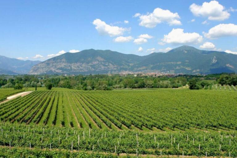 La Regione Lombardia spera di rafforzare il legame tra i 700 produttori di vino e i 4500 ristoranti interessati dalla misura di sostegno al vino regionale.