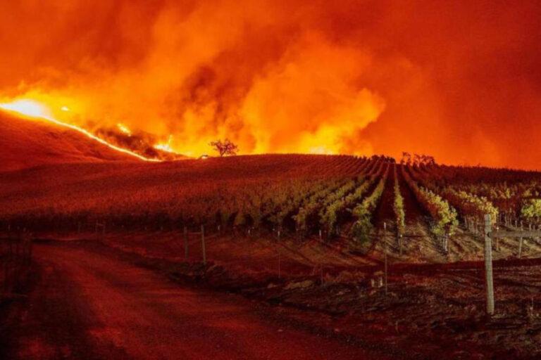 Le fiamme che minacciano il vigneto californiano costringono ad interrompere la vendemmia. Paura per le conseguenze sulla capacità produttiva.