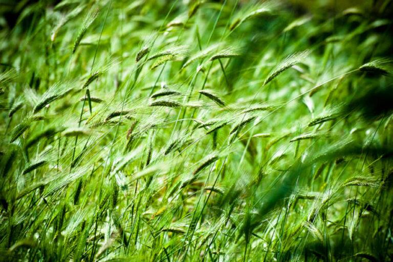 FEE e Confagricoltura premiano quarantasei borghi dove è massima l'attenzione per la sostenibilità ambientale e agricola.