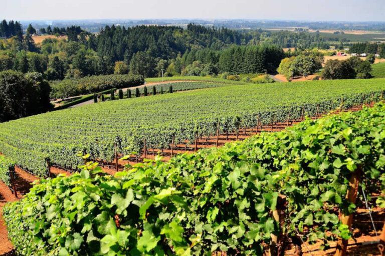 Dal trittico vitivinicolo voluto dalla Regione emergono giudizi positivi sulla qualità dei 13 milioni di quintali di uva prossimi alla vendemmia in Veneto.