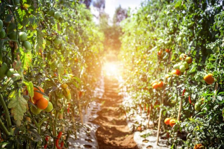 Cresce il peso della filiera Wine&Food italiana, primatista a livello europeo in quanto a Denominazioni di Origine riconosciute.
