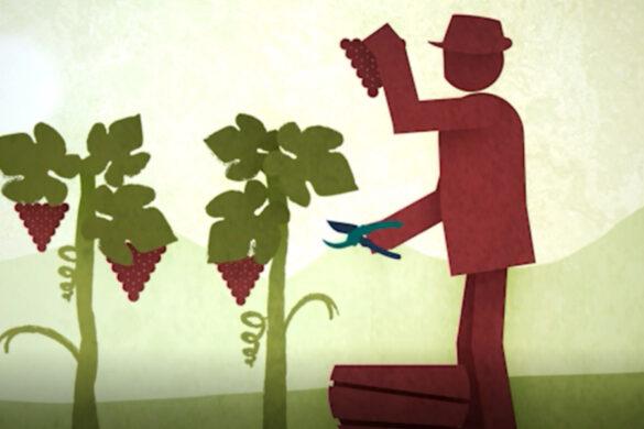 Con un video animato inedito parte il progetto a sostegno del principale simbolo dei Vignaioli Indipendenti. Il protagonista è Ampelio, colui che cura la vigna.