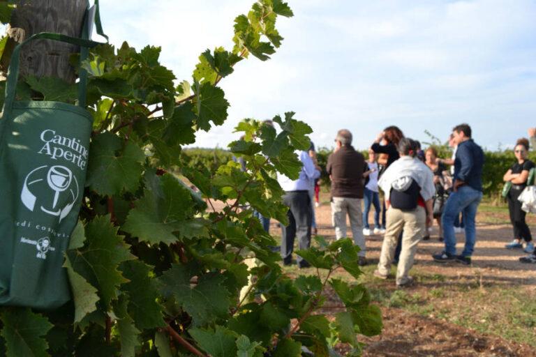 Per tutto il mese di settembre e ottobre le cantine del Movimento Turismo del Vino Toscana apriranno le porte ai wine lovers durante il periodo più suggestivo dell'anno.