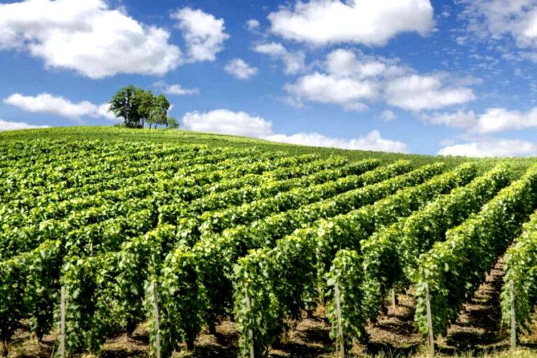 Soddisfatti i rappresentanti della filiera vitivinicola, che parlano di passo in avanti per la valorizzazione della categoria più pregiata di vini italiani.