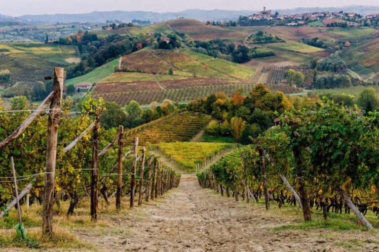 Un viaggio tra libri, cultura e buon vino animerà il settembre della rive gauche del Tanaro.