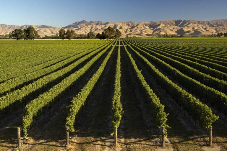L'OIV premia il volume La Nuova Normativa Vitivinicola per il suo contributo alla comprensione e utilizzo del Testo Unico sul vino.