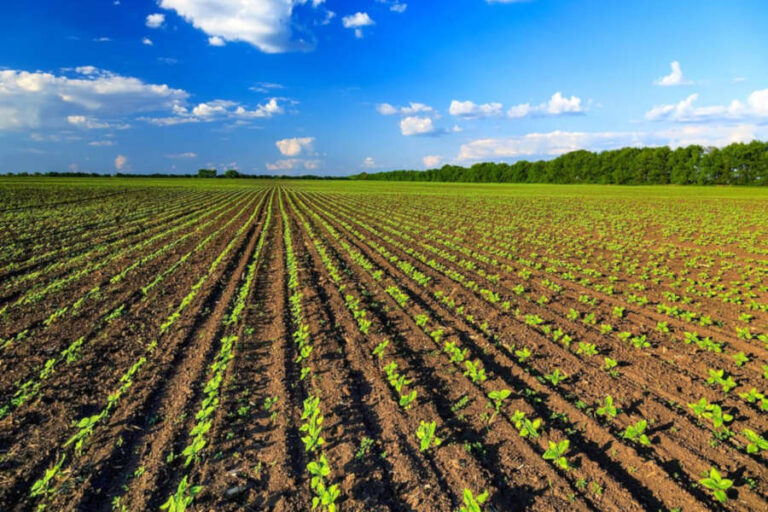 Potrebbe slittare di un anno il tanto atteso quadro normativo per l'agricoltura biologica, pronta a raccogliere la sfida posta dal Green Deal europeo.