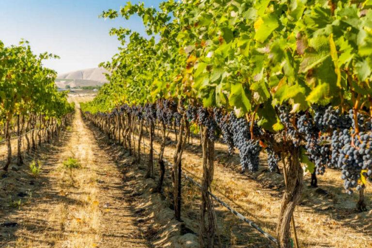 La società certificatrice inserisce le tematiche sociali del lavoro tra le questioni rilevanti in materia di sostenibilità del vino.