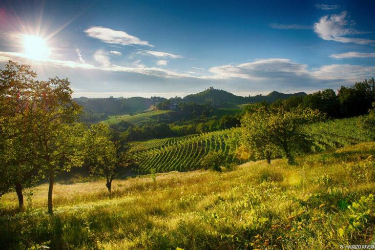 Regione Piemonte e consorzi di tutela uniti per la valorizzazione di questo storico vitigno a bacca bianca.