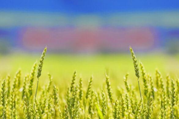Il ministro dell'agricoltura spinge perché sia approvato quel testo unico sul biologico fondamentale per il rilancio dell'intero comparto.