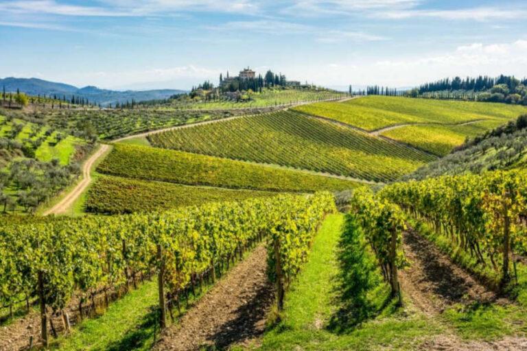Il Consorzio chiantigiano propone un innovativo viaggio attraverso il territorio per descrivere i diversi stili dei suoi vini.