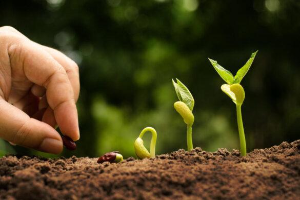 La Federazione plaude all'impegno della Ministra Bellanova per una veloce approvazione della tanto attesa norma che regoli la filiera biologica.