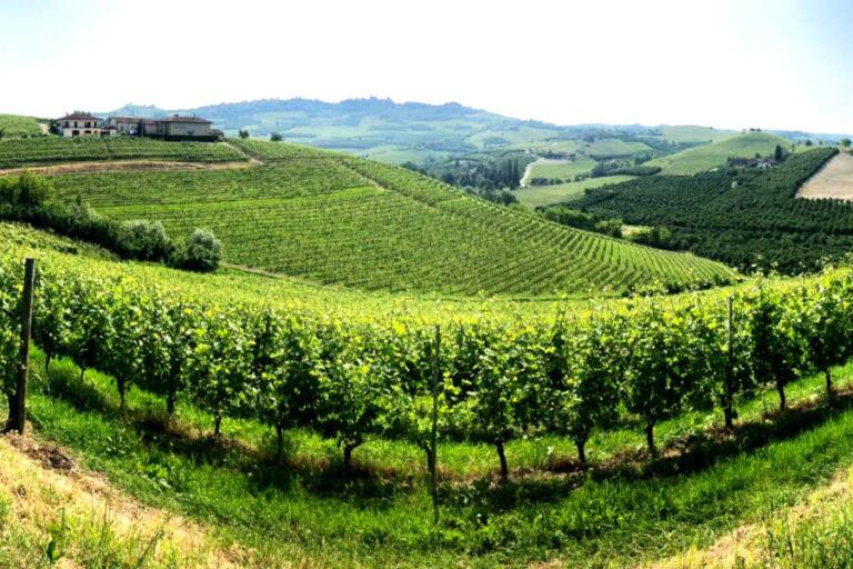 Il progetto promosso dalla Fondazione CRC mira a valorizzare lo storico appezzamento ai piedi del castello con un vino destinato a progetti di valenza sociale.
