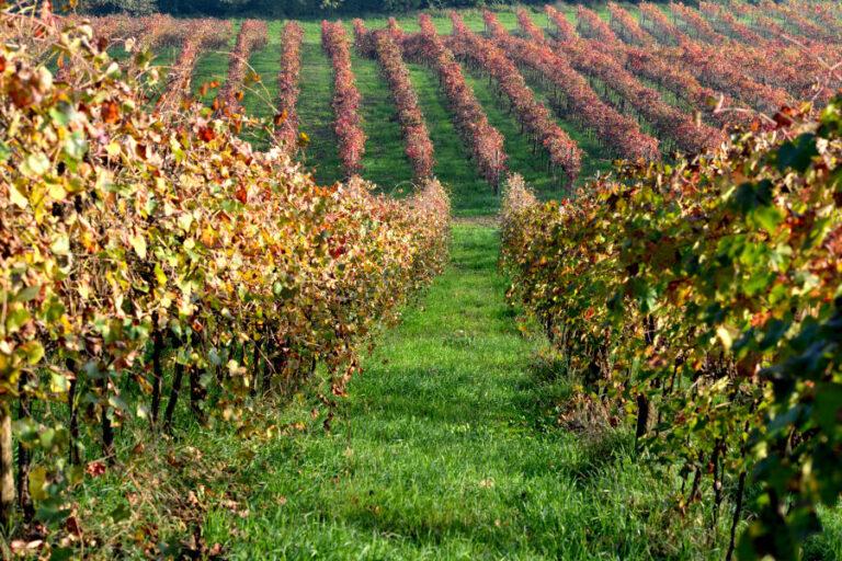 Grazie alla spinta in gdo, il vino simbolo dell'Emilia ha resistito bene in fase di lockdown e – rimarca il direttore Savorini – con il Consorzio unitario vedrà una spinta forte sull'estero.