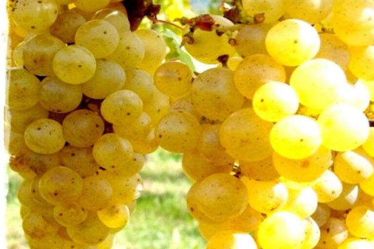 La denominazione ai confini della Slovenia si aggiunge ai 525 vini già iscritti nel registro europeo delle IG comunitarie.