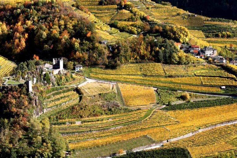 Al via la campagna di comunicazione incentrata sul rapporto tra aziende e luoghi di vendita, uniti da un metaforico chilometro lungo il quale si ritrova l'identità vitivinicola del Trentino.
