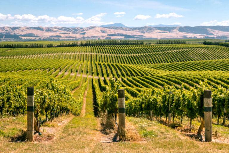 Il direttore generale Oiv, Pau Roca, ha presentato nel corso di una videoconferenza le prime stime sulla produzione vinicola mondiale del 2020.