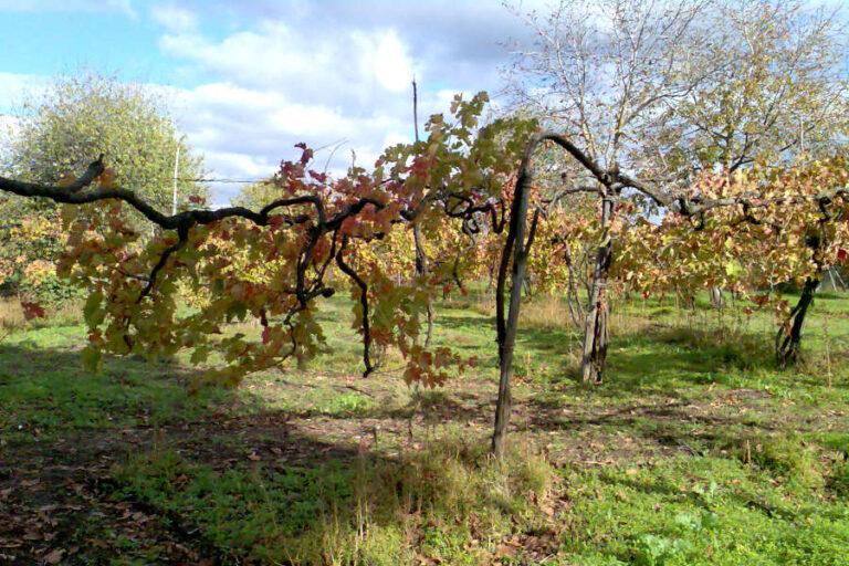 Da oggi online il sito vitigniirpini.com, il portale dedicato all'enoturismo che ti permette di adottare un filare di Taurasi, Fiano di Avellino e Greco di Tufo.
