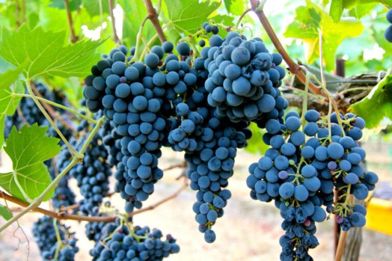 Il presidente Busi denuncia le difficoltà del sistema bancario a supportare le aziende vitivinicole, impegnate ad uscire dalla crisi economica imposta dalla pandemia.