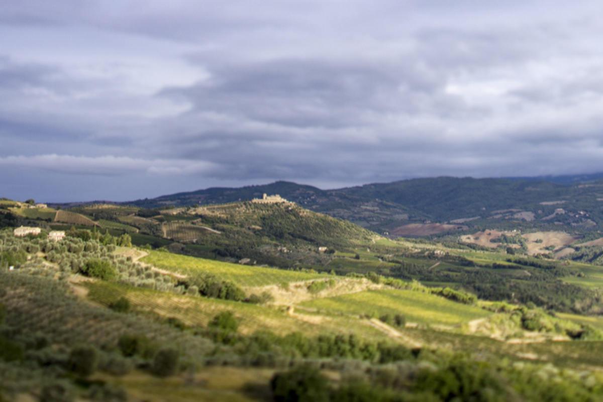 Sei interpretazioni del vitigno-simbolo del territorio montalcinese per una cantina che rappresenta un'icona di storia e qualità (con punteggi altissimi).